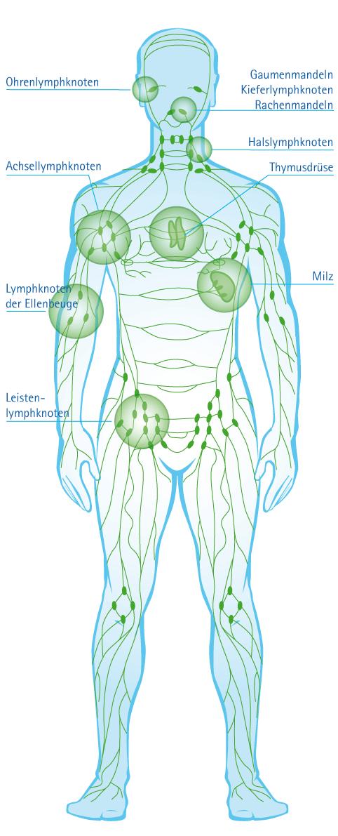 Lymphome/Lymphdrüsenkrebs - Diakonie-Klinikum Stuttgart